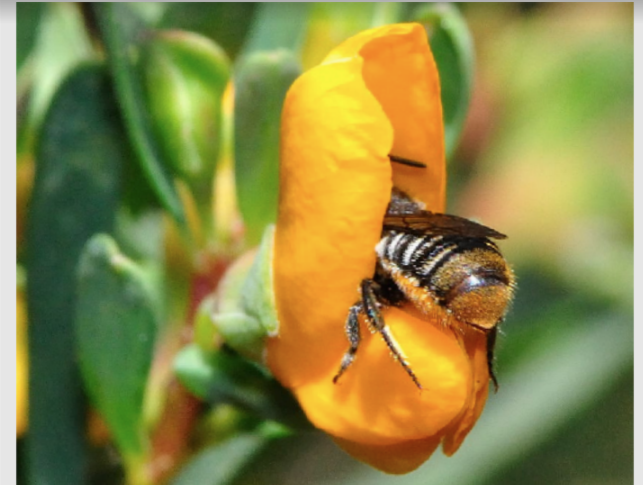Pollinators, Agriculture, and Impacts of Large Scale Weather Modification